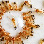 Eliminar insectos y prevenir su aparición